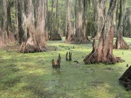 Drain the swamp.