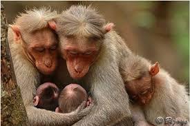 nurturing-monkey-2
