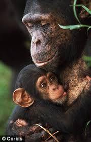 Nurturing monkey.